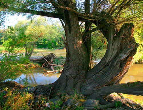 Nationalpark Donau-Auen: Kelten und Kormorane